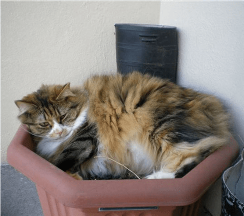 Cat passed out in an octagon shaped flower pot