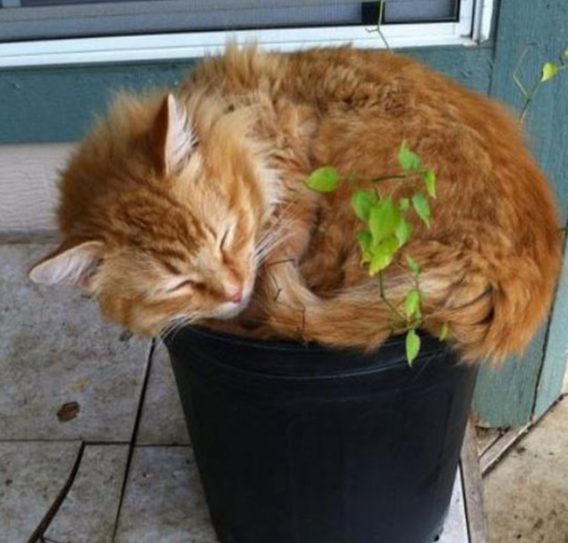 Small cat on an even smaller flower pot, doesn't really fit on it.