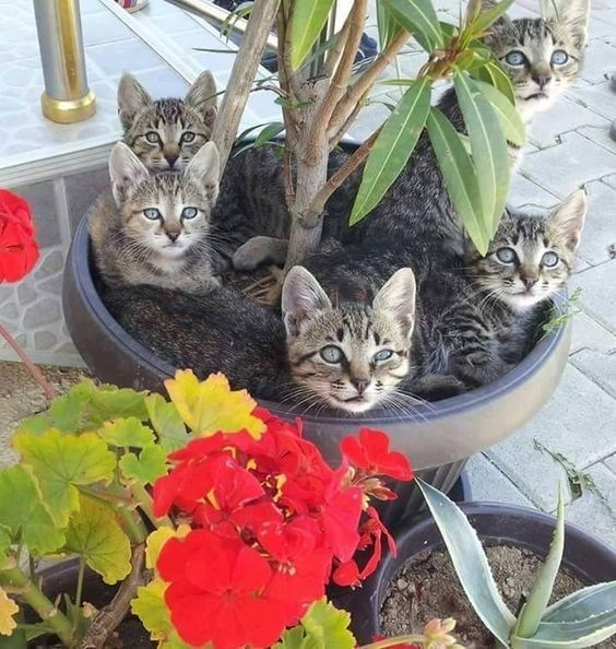 bunch of cats snuggled up in a large flower pot with a tree