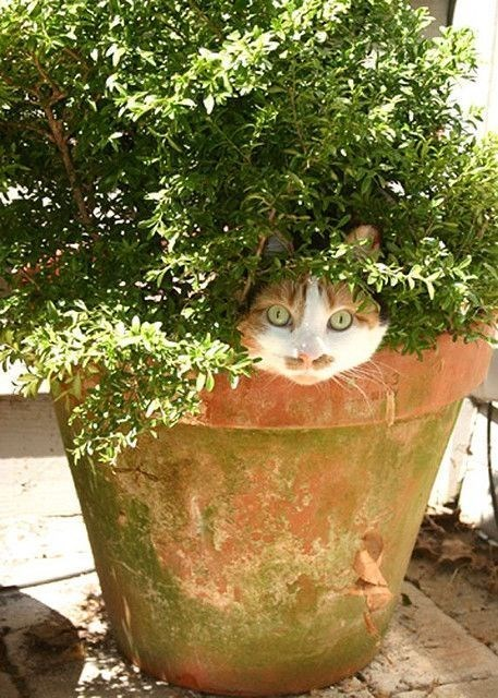 Cat in a flower pot almost hidden by all the leaves