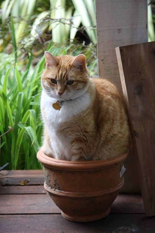 cat in flower pot not approving of you taking his picture