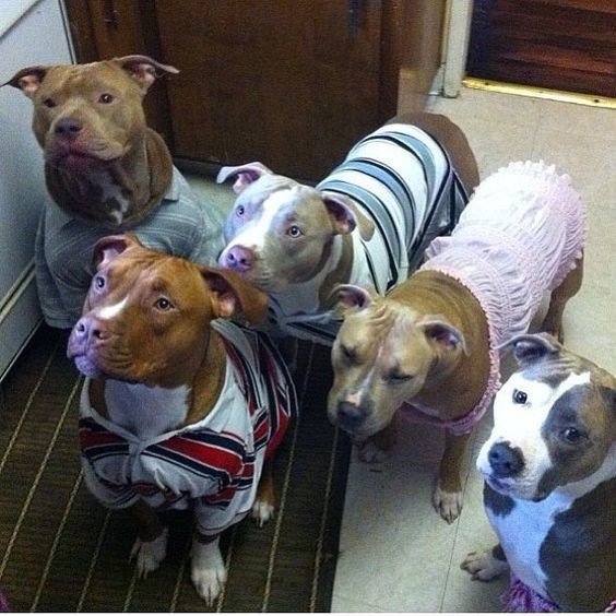 Gang of well dressed dogs.