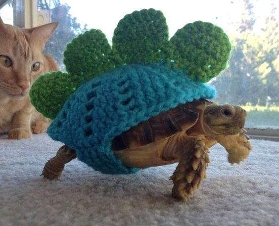 Turtle wearing a totally rad sweater that makes him look like mini dinosaur