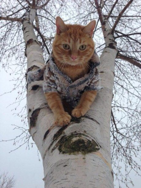 Cat in a tree wearing a very cool looking sweater