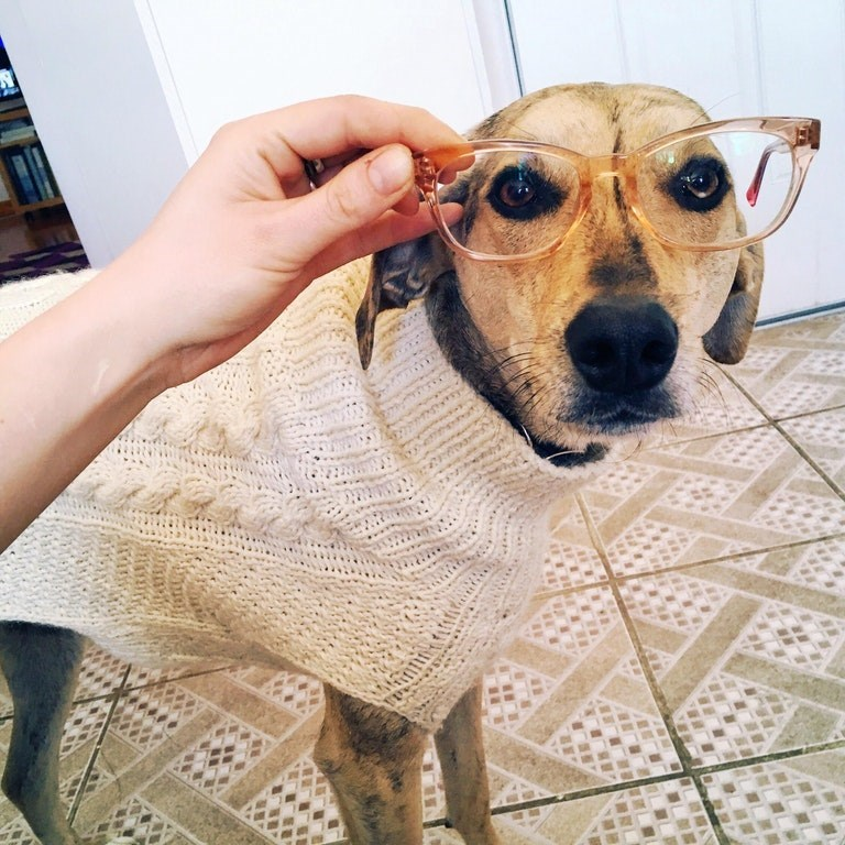 Funny dog picture wearing old lady glasses and turtle neck sweater