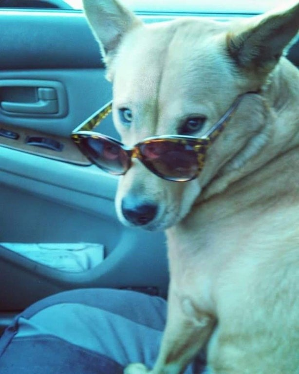 Dog wearing sunglasses and OMG what did he say after that?