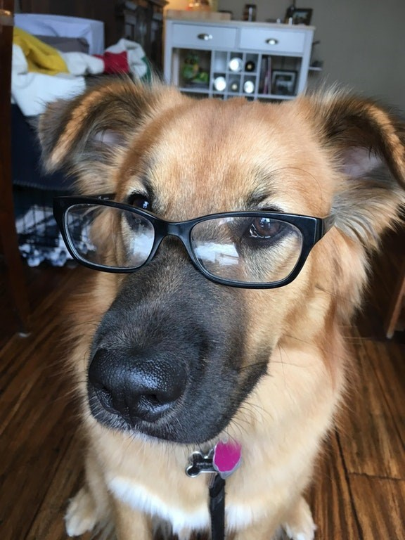 Dog wearing glasses that prove you are wrong about everything