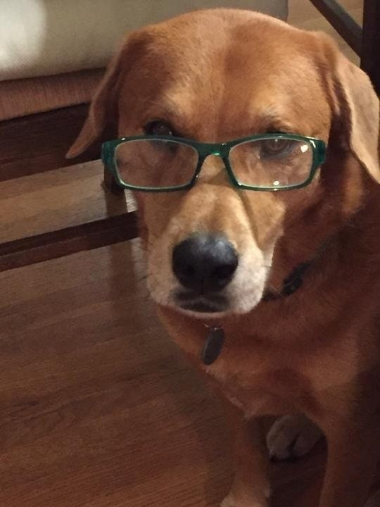 Dog wearing glasses and sick of your sh*t