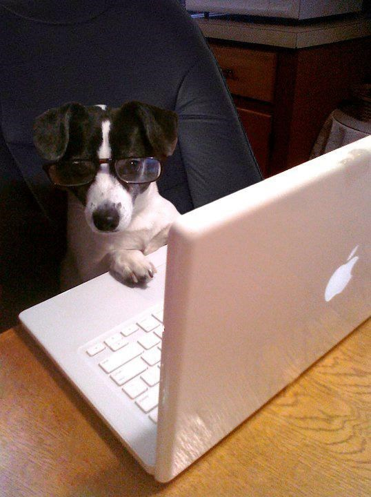 Dog wearing glasses and on the computer, reviewing your finances