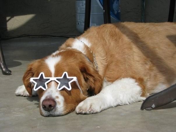 dog wearing star shaped sunglasses