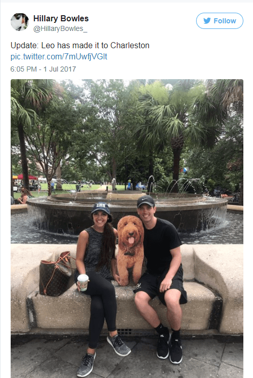 Cardboard cutout of dog makes it to Charleston on Twitter