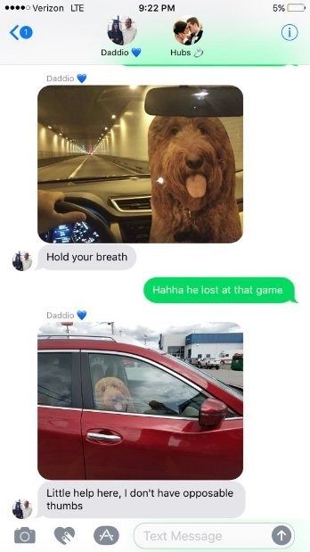 DMs of Leo the cardboard dog in a car