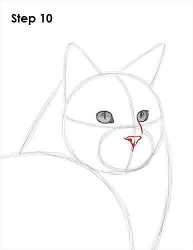 Cat - Step 10