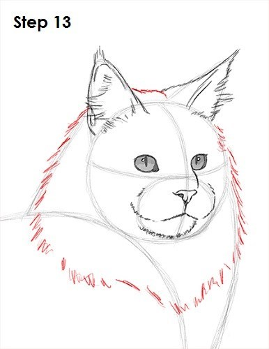 Cat - Step 13