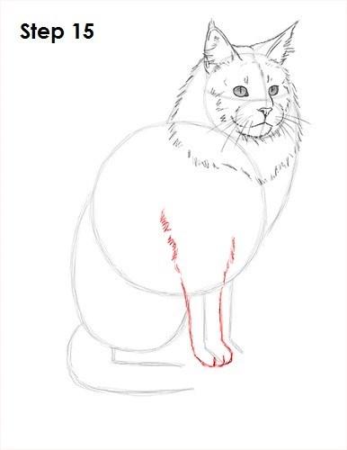 Cat - Step 15 w