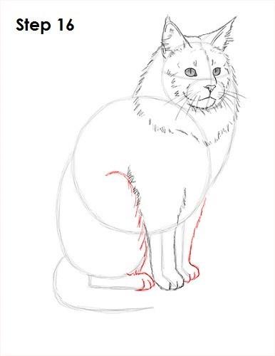 Cat - Step 16