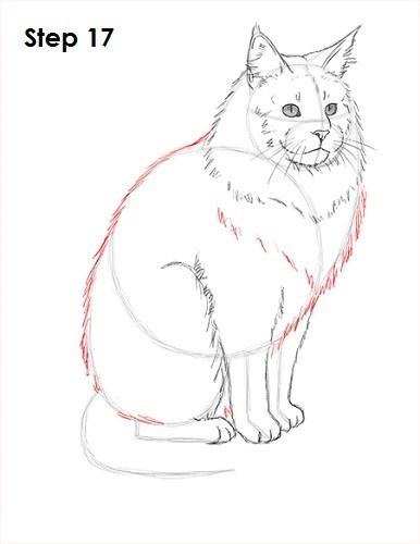 Cat - Step 17