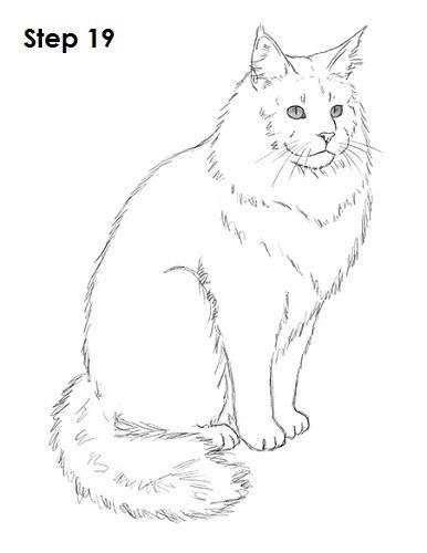 Cat - Step 19 W