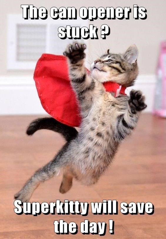 a funny meme of a kitten in a cape saying its super kitten