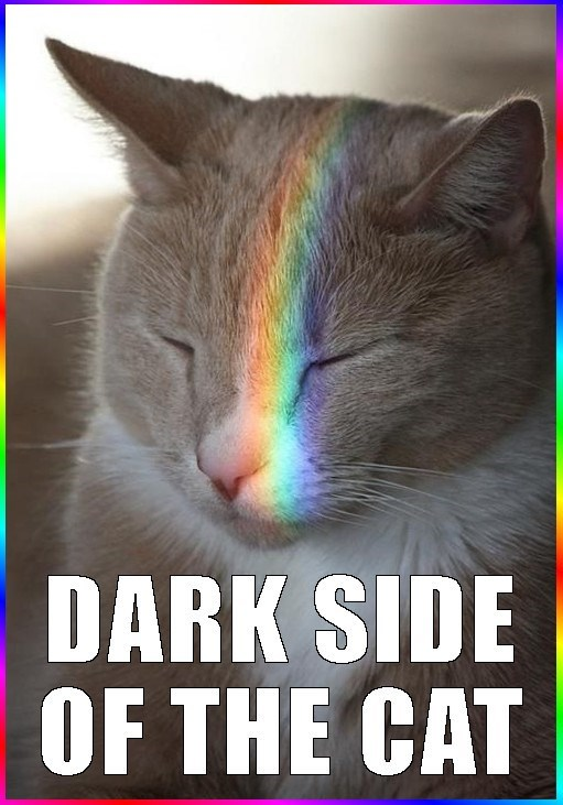 cat with a rainbow aberration cast across his furry face, with caption pointing out the similarities of this pic and the cover of Pink Floyd, Dark Side Of The Moon