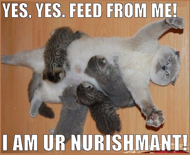 funny meme of a cat lying on her back and having her kittens feed on her