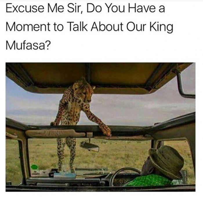 Adaptation - Excuse Me Sir, Do You Have a Moment to Talk About Our King Mufasa?