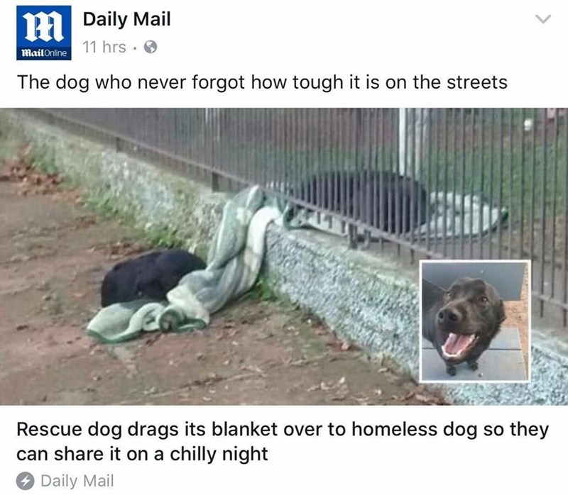 Article screen grab of a rescued dog that remembered how life on the streets was and brought his blanket to share with homeless dog.