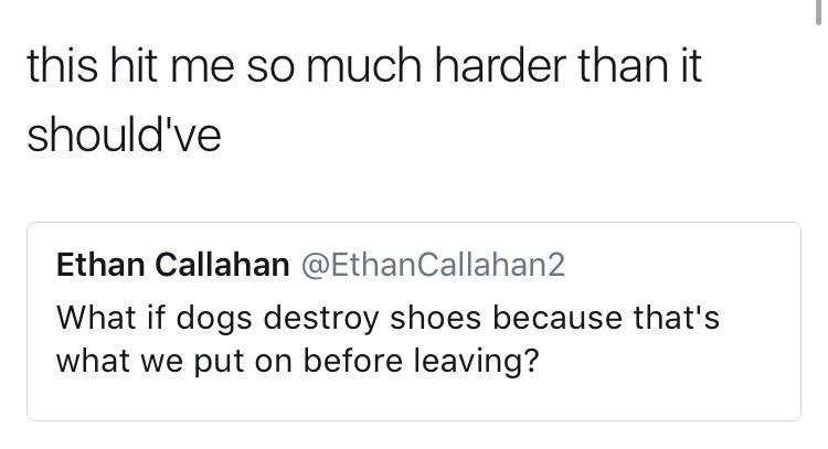 Meme about how dog might destroy our shoes because it is the last thing we put on before leaving them all day