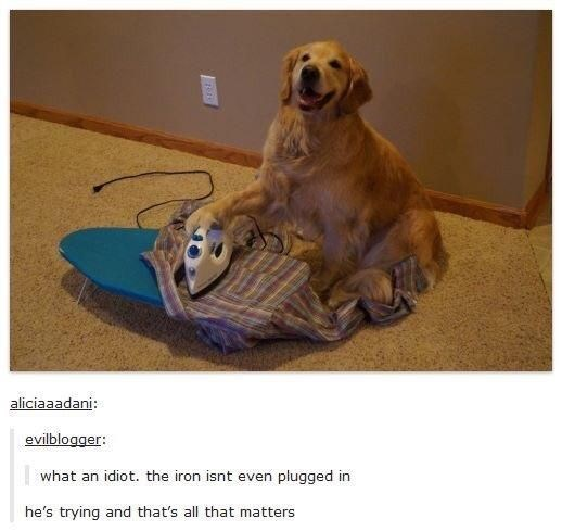 Dog ironing a shirt but it is not even plugged in.