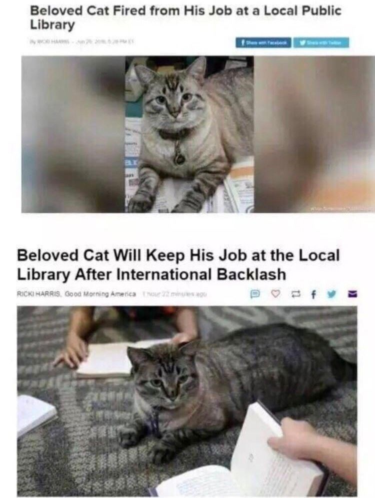 Meme about a cat who got fired and re hired at a local library. Not clear cat understood anything that was happening