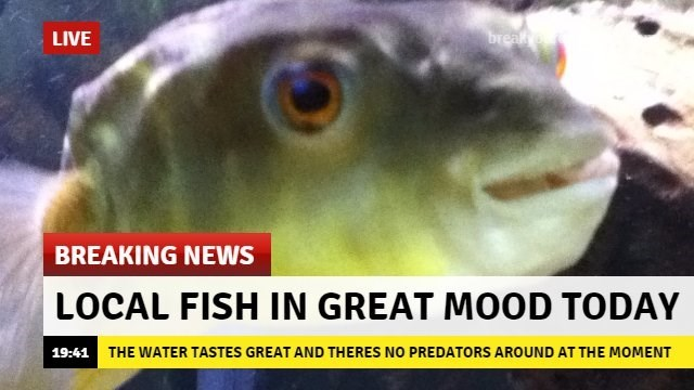 Breaking news story about a fish being in a great mood today