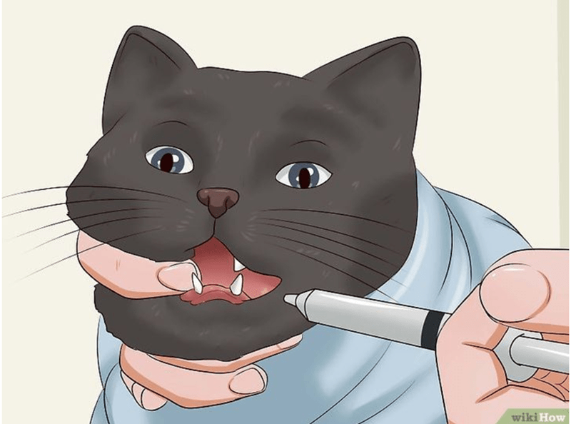 using syringe, inject medication to cats mouth.