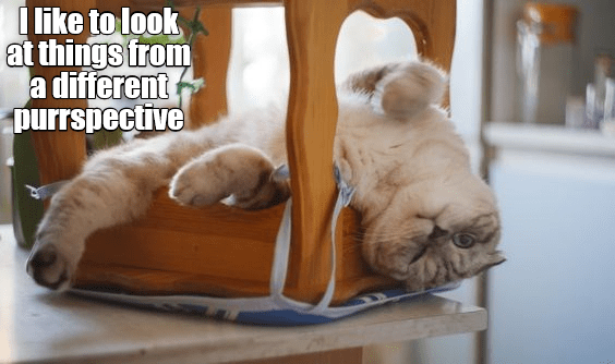 a funny cat meme from lolcats of a kitten lying upside down on a chair that is also upside down.