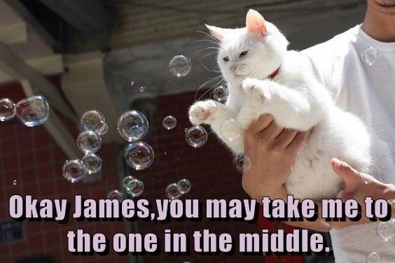 Funny cat meme of Cat calling his owner James and instructing him to take him to the middle bubble to perhaps pop it with his claws.