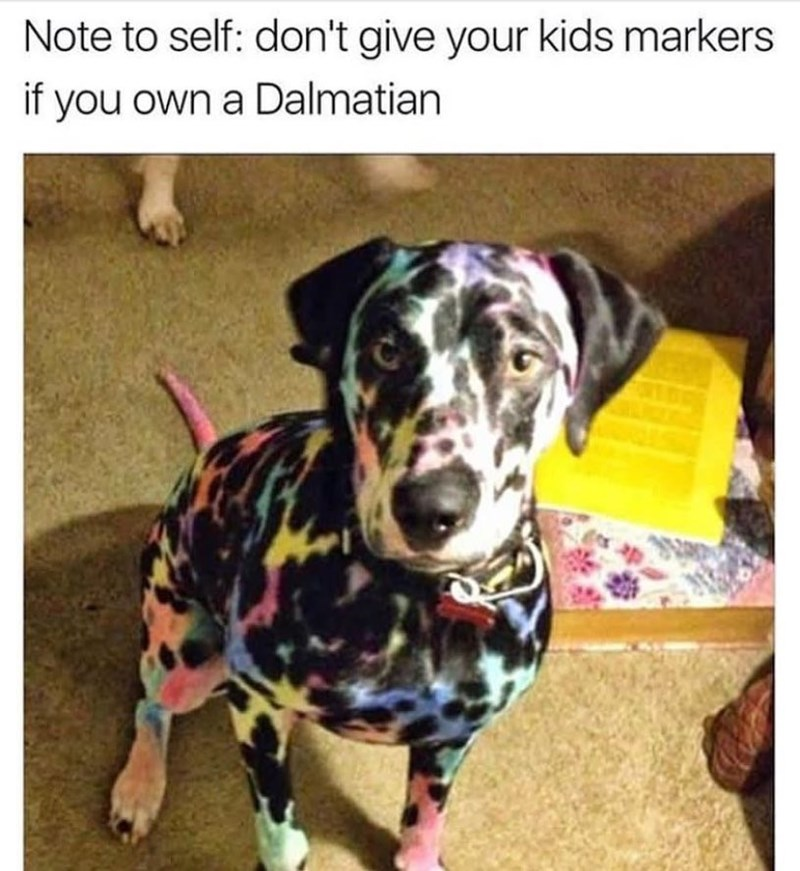Funny meme about kids coloring in a dalmation, looks like Lisa Frank art.