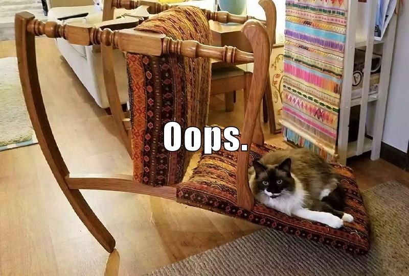 a funny cat meme from lol cats that shows . cat knock over a chair and just still sitting