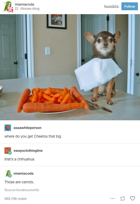 Advertising - miamiacoda tumblr. Follow illinose-blog asaawhiteperson where do you get Cheetos that big swaysclothingline that's a chihuahua miamiacoda Those are carrots Source:ilovebrucewillis 593,706 notes