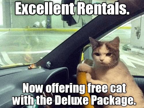 Cat in a car rental meme