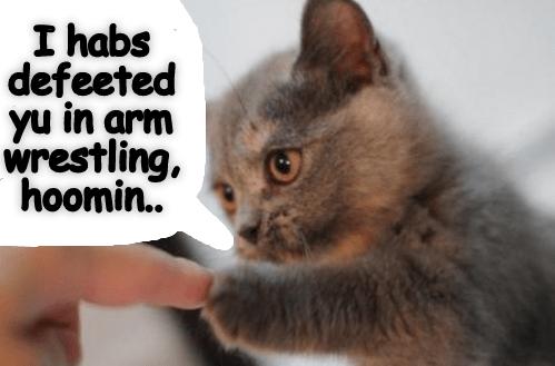 Kitten arm wrestling meme