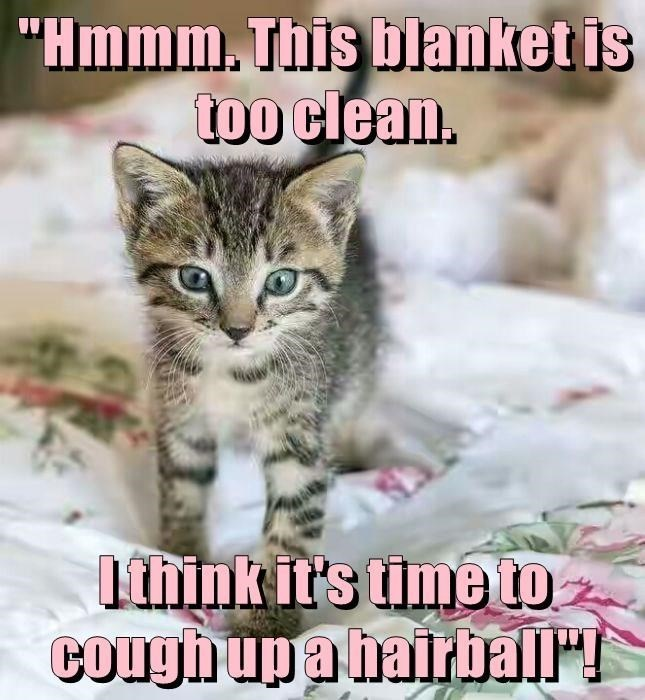 clean blanket cat meme, time to cough up a hair ball