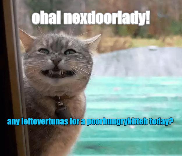 Next door lady cat meme