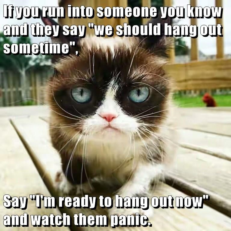 Grumpy cat meme about when someone says we should hang out sometimes and you answer I am ready to hang out now to make them panic