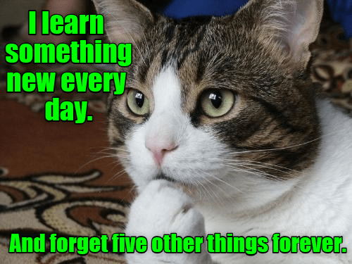 Very funny cat meme about how you learn something new everyday and forget 5 other things forever.