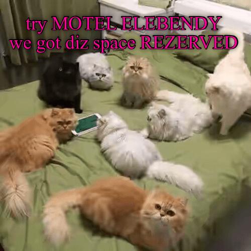 lolcats funny memes Memes Cats - 9058752256