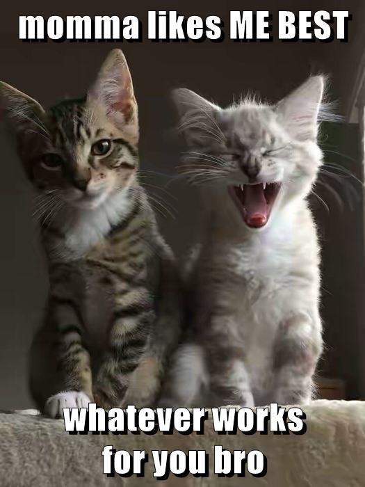 funny memes Cats - 9058752512
