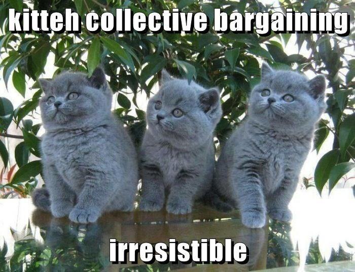cute Memes Cats - 9058752768