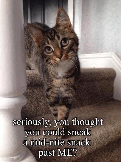 lolcats Cats funny - 9058753024
