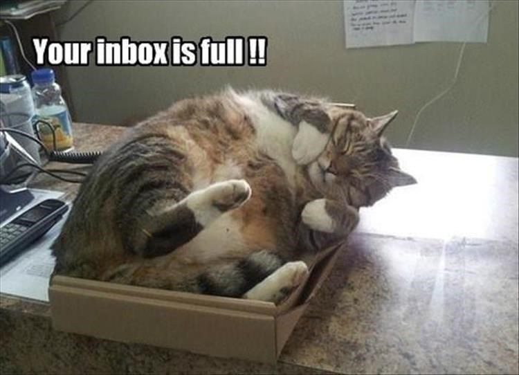 Cat in a box so it is a full inbox cat meme