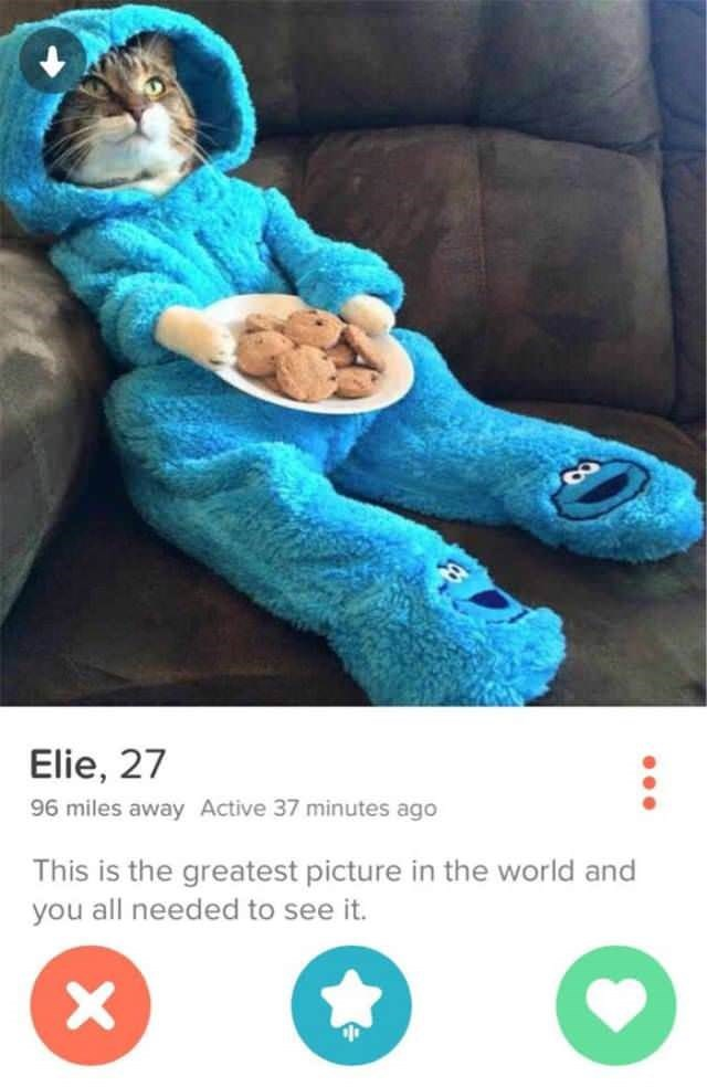 elie 27 has tinder profile of cat wearing cookie monster pajamas and holding cookies
