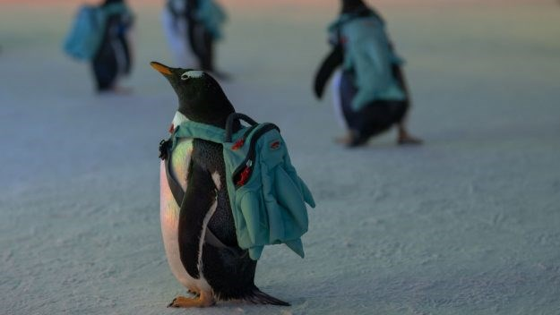 penguins backpack cute animals